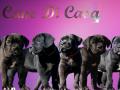 banner-pups.