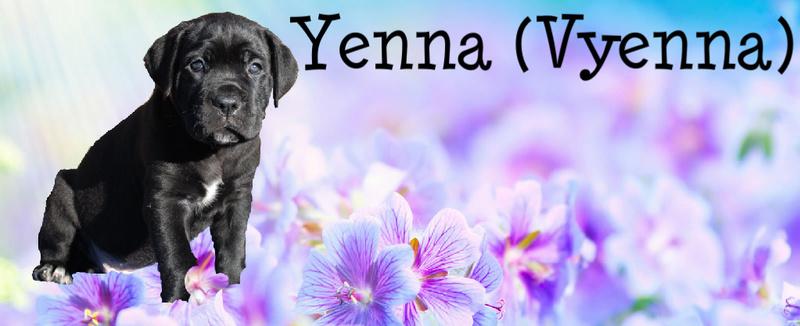 Yenna rose