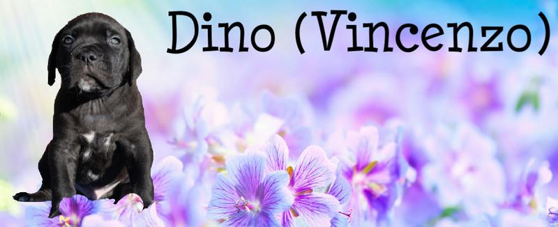 dino d-blauw