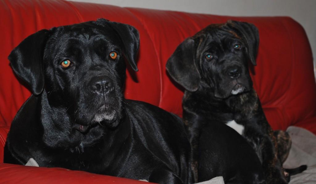 26-11-2011 vin en sofia 009
