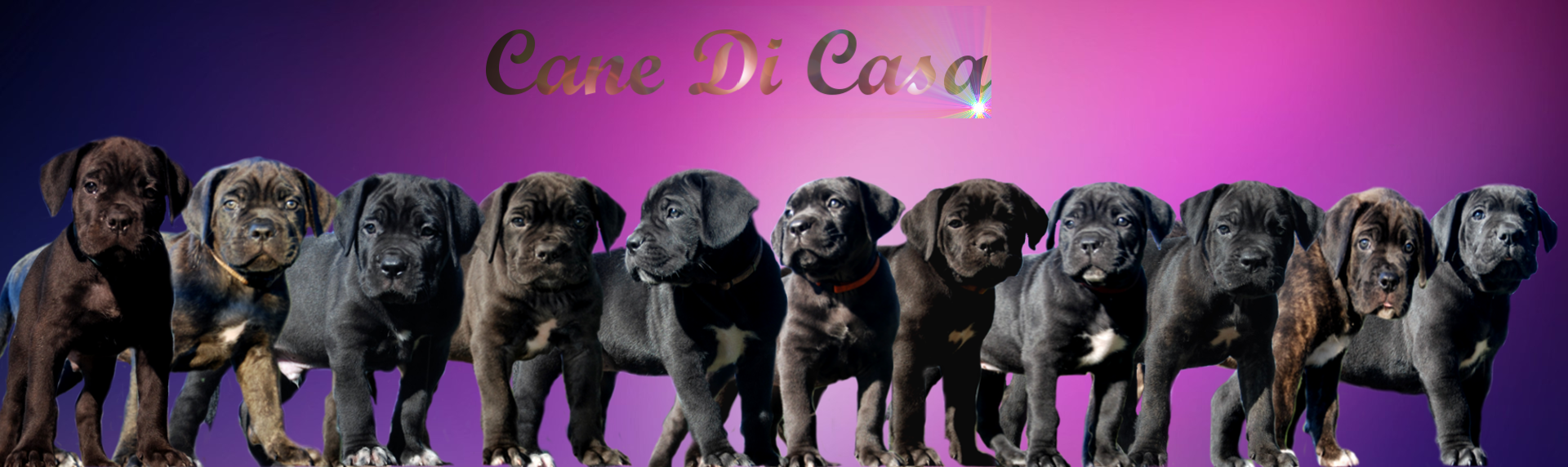 banner-pups-png